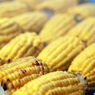 Char-grilled Half Corn on the Cob